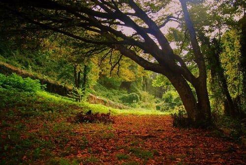 belgrad-ormanı-resimleri16 İstanbul'un Gezip Görülesi Park ve Bahçeleri